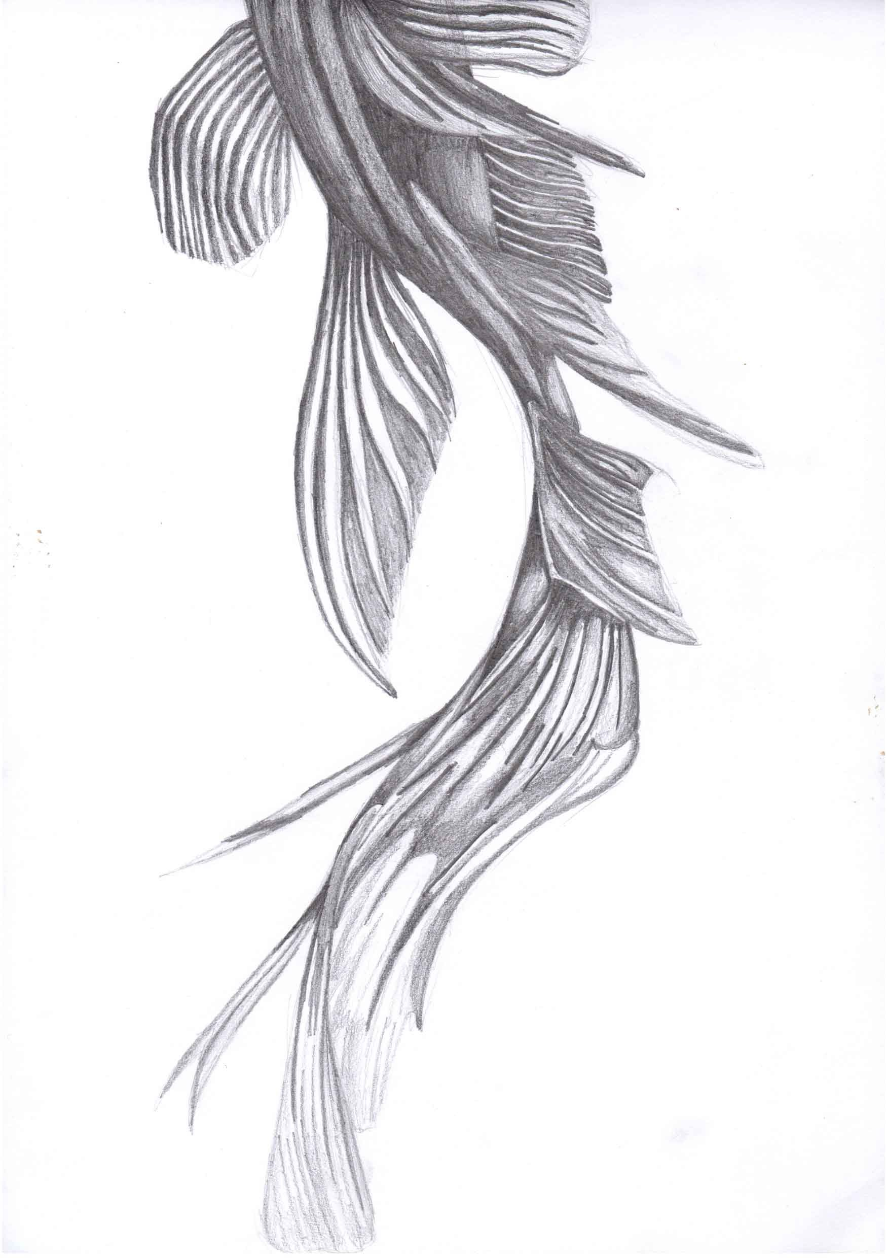 This is a graphic of Bewitching Fish Drawing Images