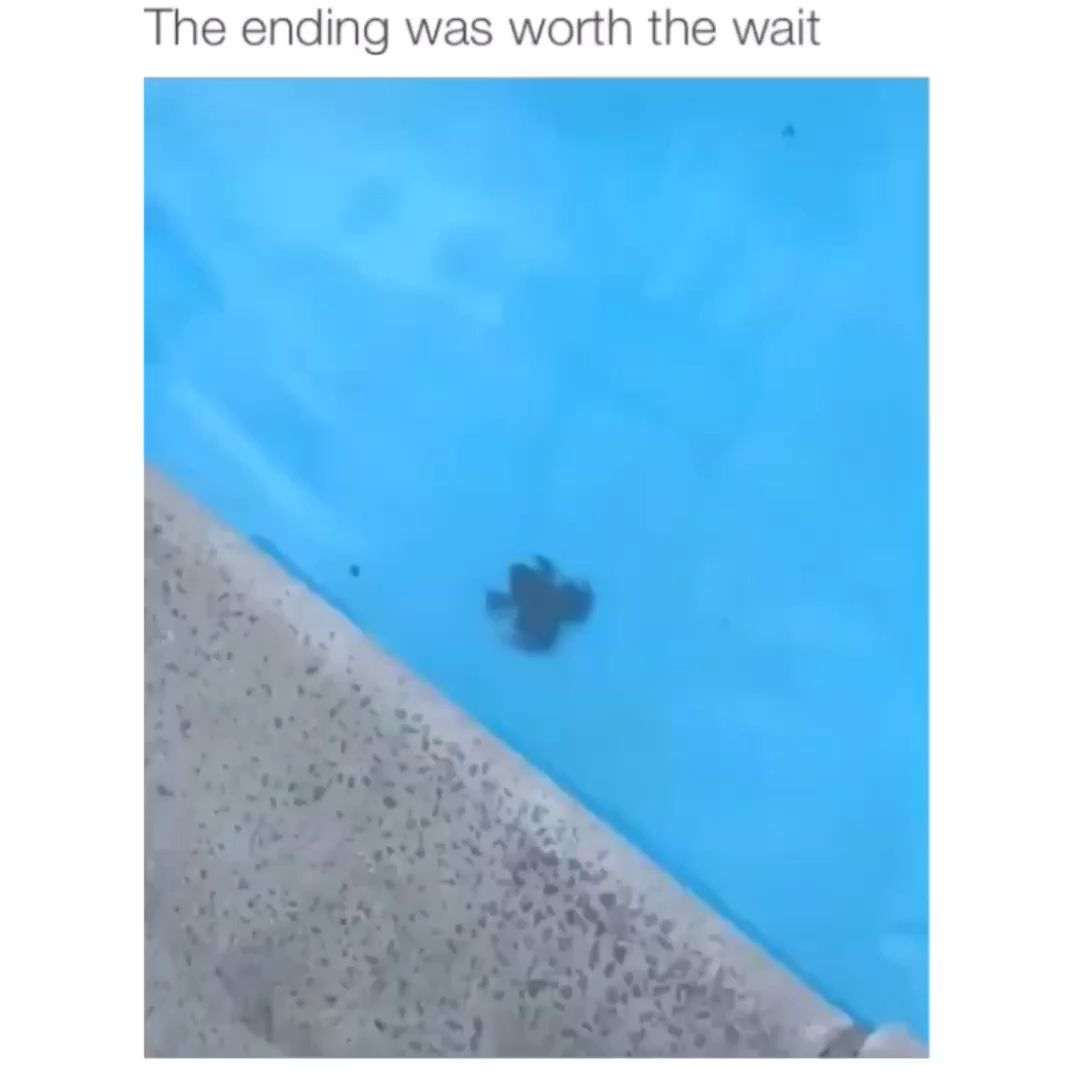 Best Funny Videos Funny memes It's not even that funny why am I laughing 9