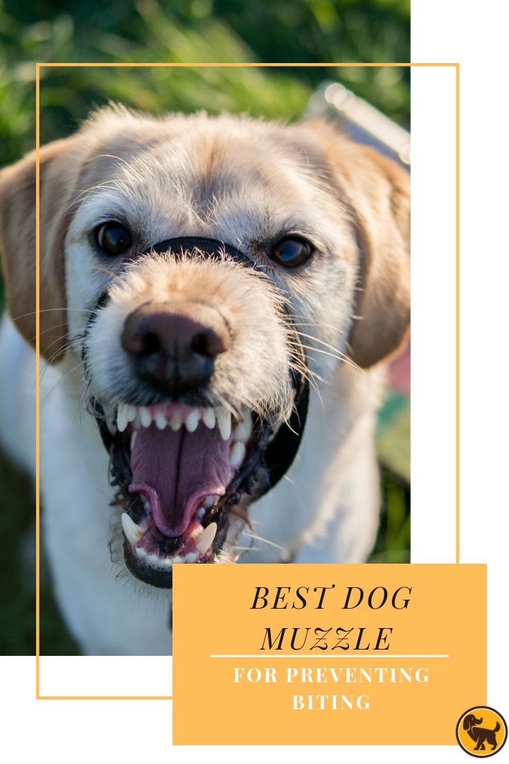 Best Dog Muzzle for Preventing Biting Help Control Dog