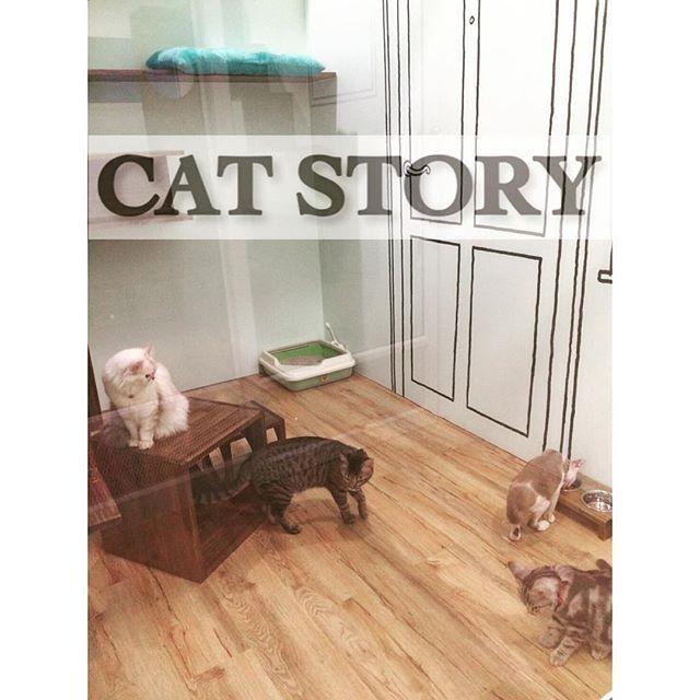 Instagram Photo By Cat Story Apr 20 2016 At 2 54pm Utc แมว กระบะทราย โรงแรม