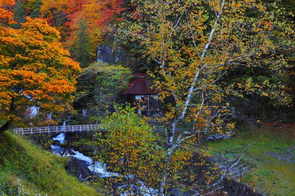 <蓼科の紅葉>色鮮やかな紅葉はすこしづつ深い色合いに