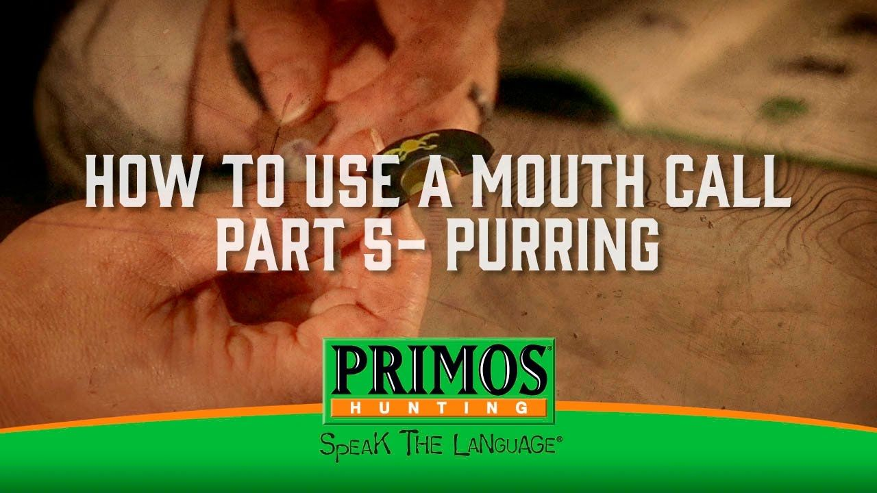 How to use a mouth call part 5 purring turkey calling