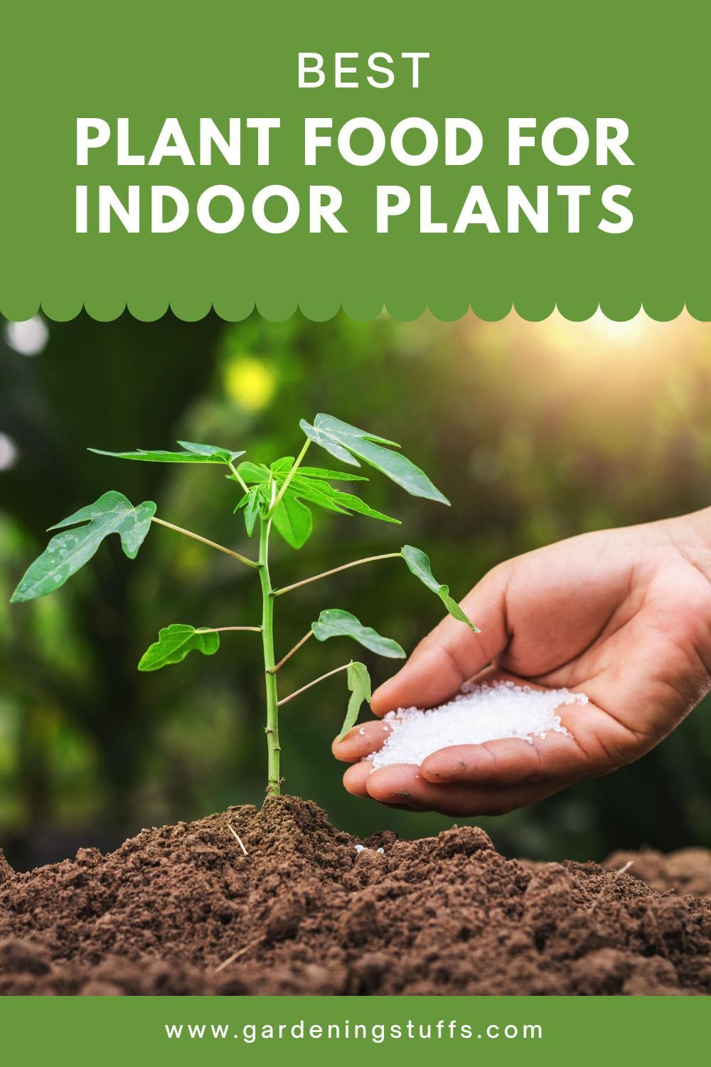 Best Plant Food For Indoor Plants Reviewed 2020 Cool Plants Plant Food Indoor Plants