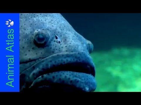 Something's Fishy! (Animal Atlas) - YouTube