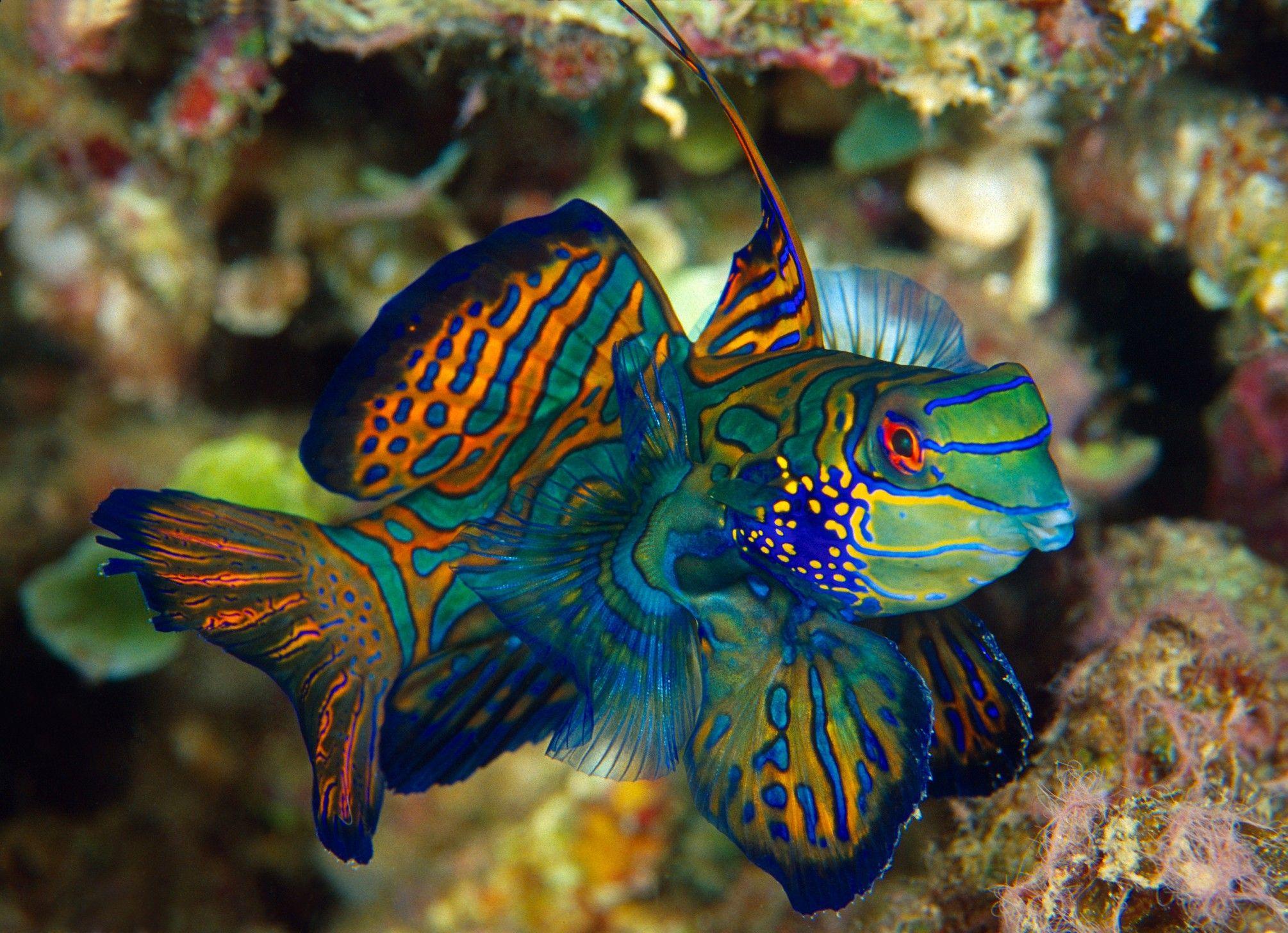 Five Aquarium Fish Best Left In The Ocean