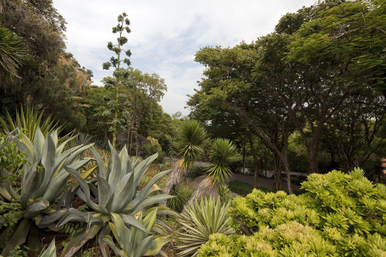 <p>Em 1949, no lugar de um antigo bananal, Roberto Burle Marx estabeleceu um sítio para reunir, estudar e reproduzir sua coleção de plantas. Com 40 hectares, o espaço conta atualmente com mais de 3500 exemplares de espécies vegetais tropicais e semi-tropicais, muitas destas recolhidas durante viagens e expedições organizadas pelo paisagista. Nesta coleção, uma das maiores do mundo, destacam-se uma grande variedade de orquídeas, bromélias e palmeiras, além de espécies descobertas pelo…