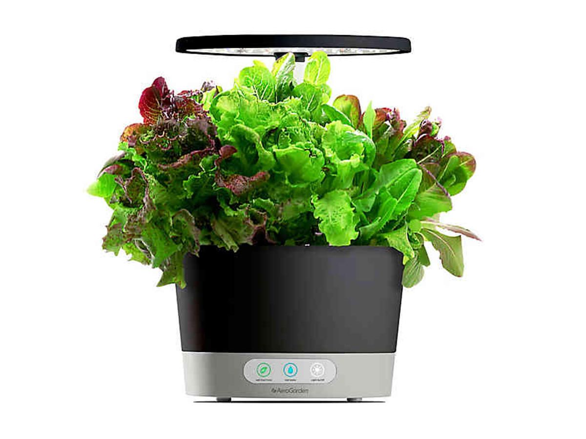 Grow Lettuce Herbs And More On Your Countertop With This 400 x 300
