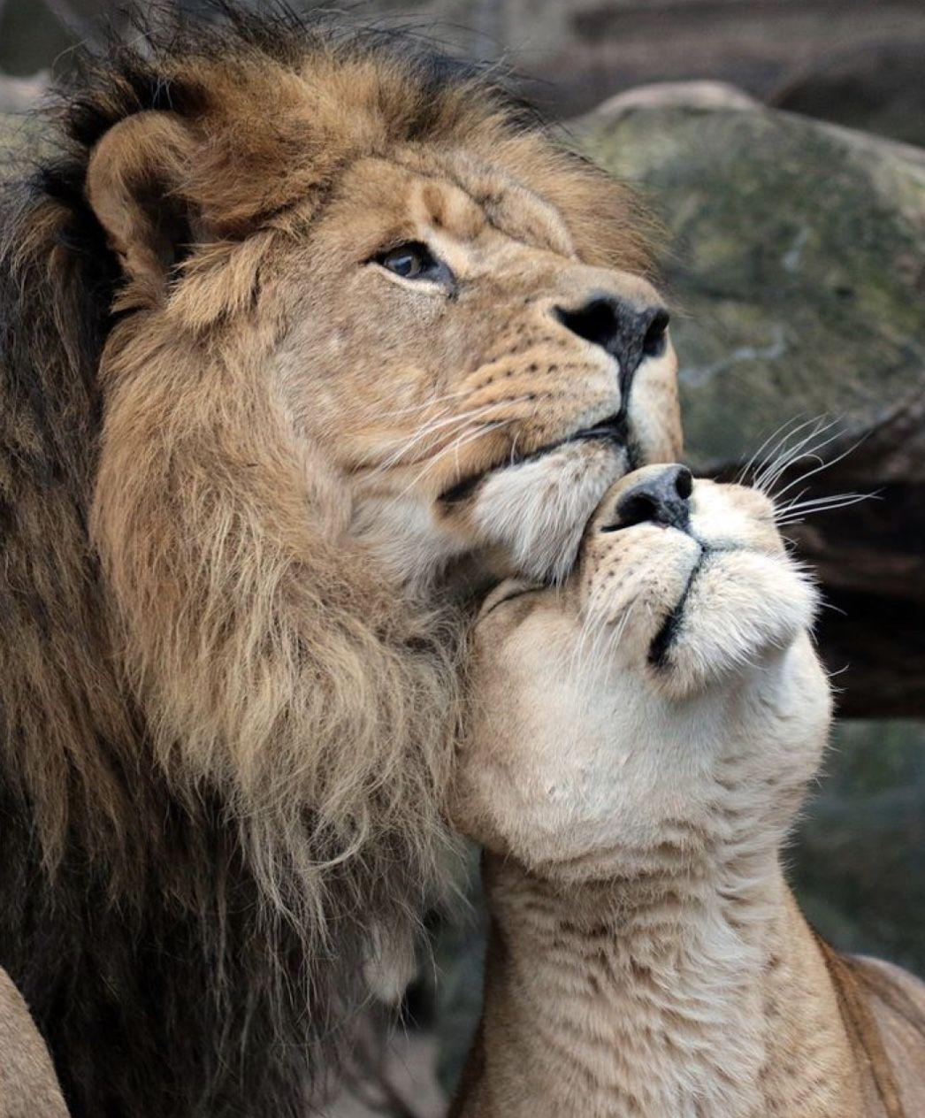 фото смешные картинки о любви и нежности любимому гордимся