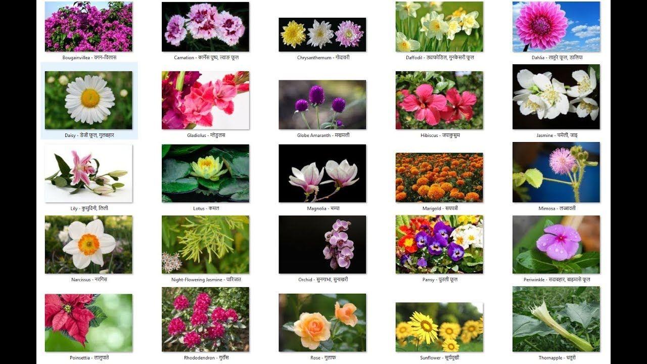 All Pati Flower Name Google Search Flower Names Flowers Name List Flower Wallpaper