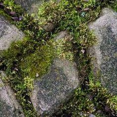 get rid of moss between patio bricks