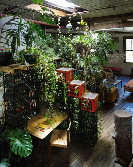 An Indoor Jungle from Down Under