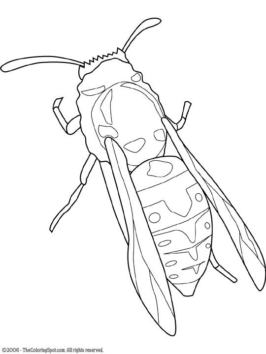 Yellow Jacket Jpg 540 720 Pixels Insect Coloring Pages Coloring