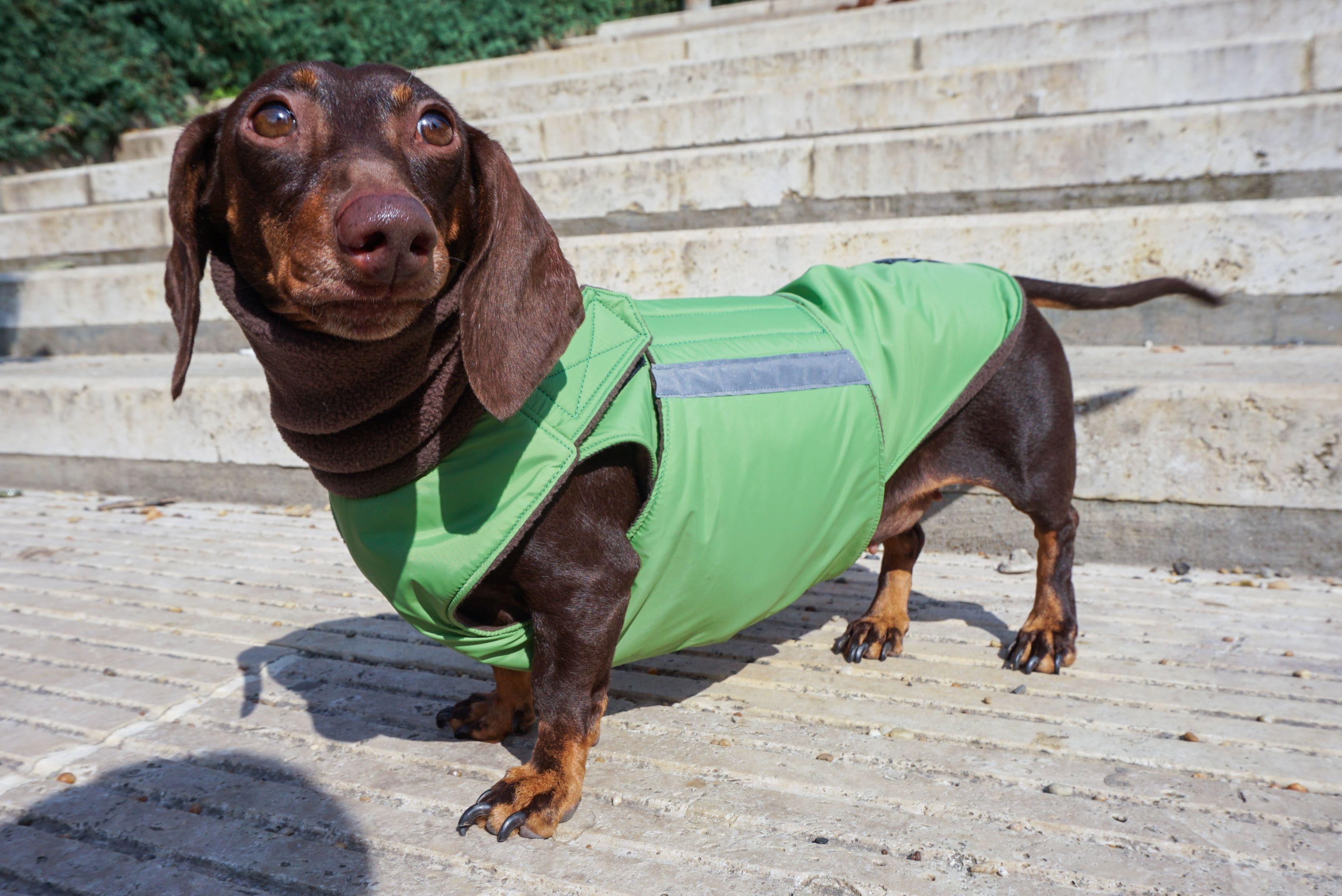 Dachshund Winter Dog Coat Made To Order Kutya