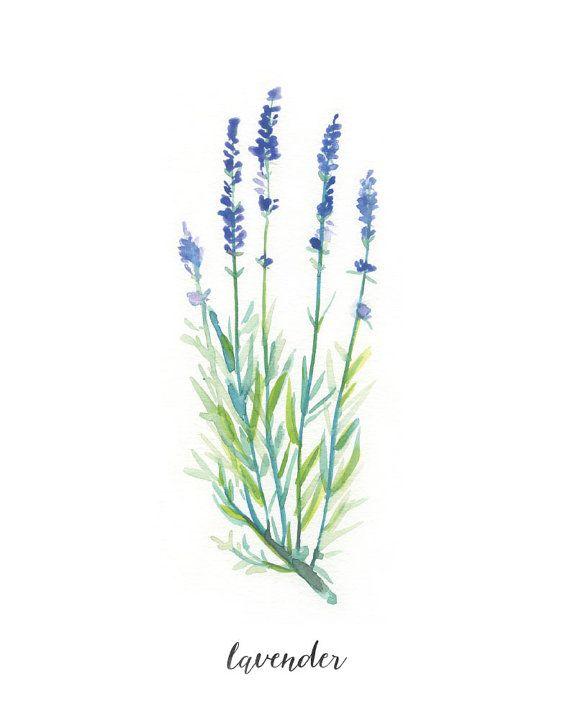 Impression Herbe Avec Etiquette Lavande Aquarelle Art Print