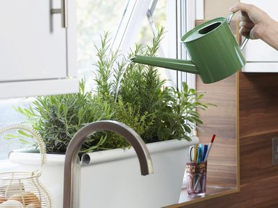 How To Grow A Windowsill Herb Garden Kitchen Herbs Herb 400 x 300