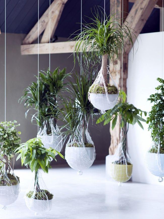 Indoor Garten hängender indoor garten mit zimmerbäumen indoor gardening garden