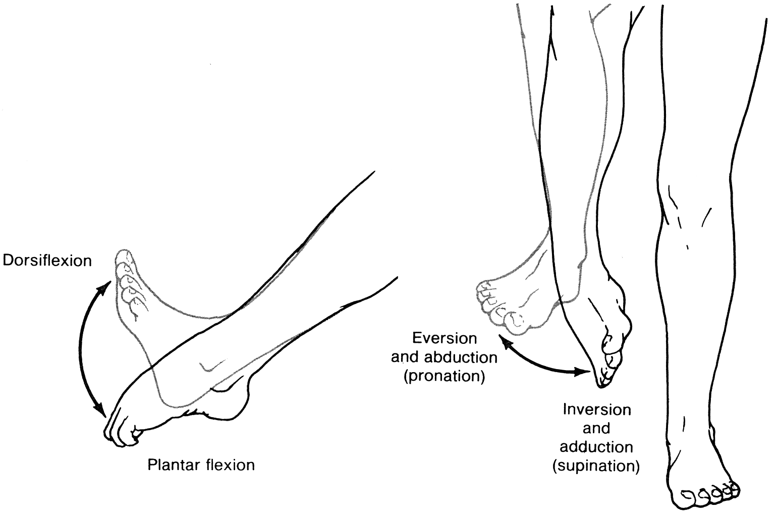 image result for inversion plantar flexion