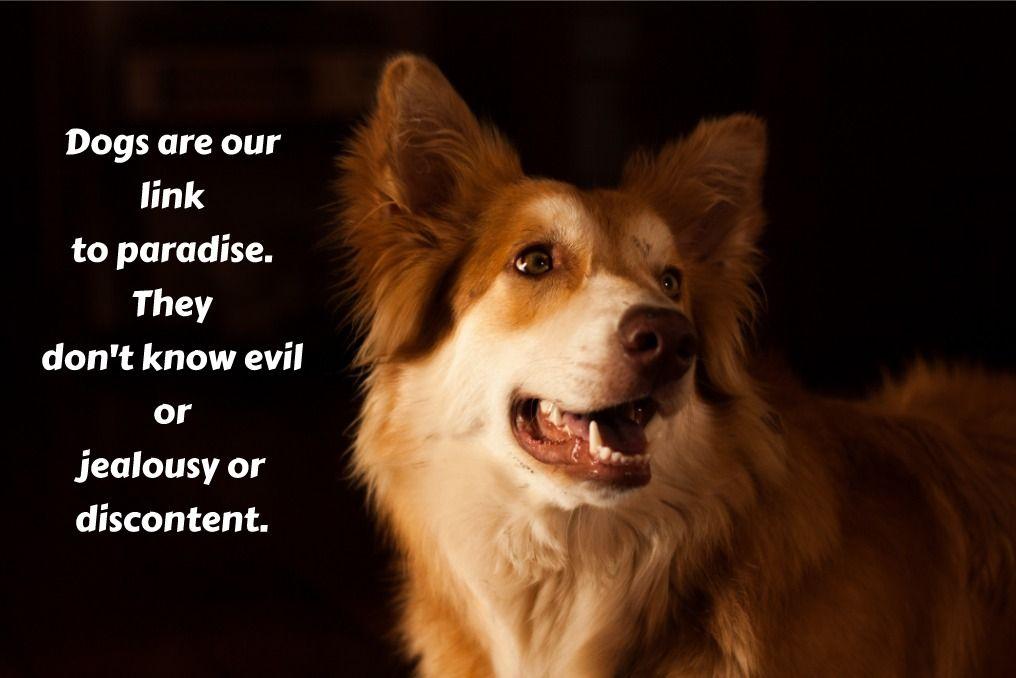 Wisdomwednesday Dog Doglovers Lovedogs Dogs Budgetpetsupplies
