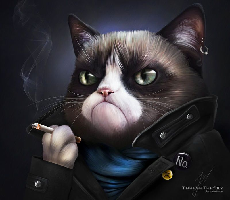 Cute Video Inspired By Angry Cat Grumpy Cat Art