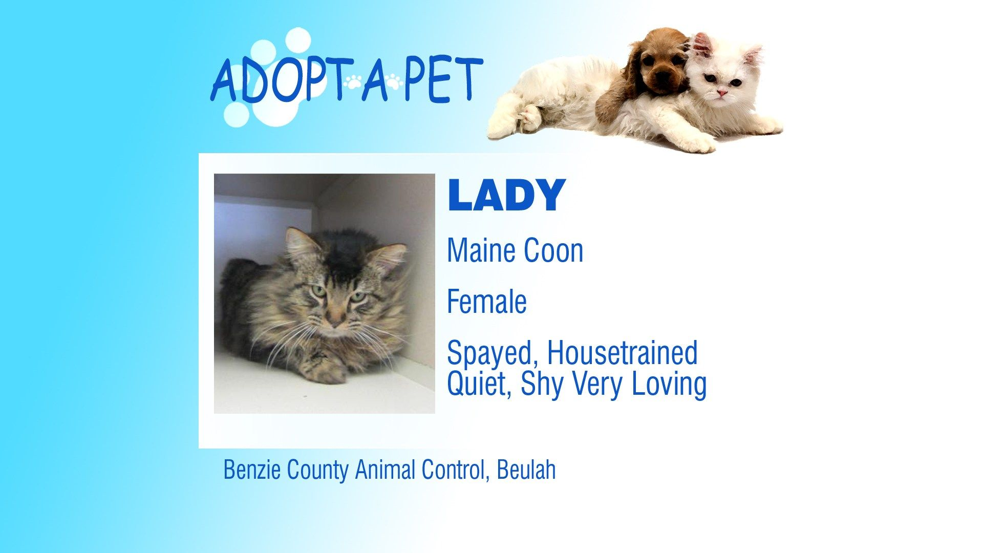 Adopt A Pet Tuesday Rico Layna Lady Northern Michigan S News Leader Pets Adoption Humane Society