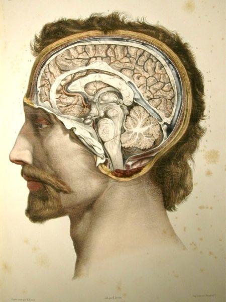 Traité complet d\'anatomie de l\'homme (1866-1871), 2nd ed. by ...