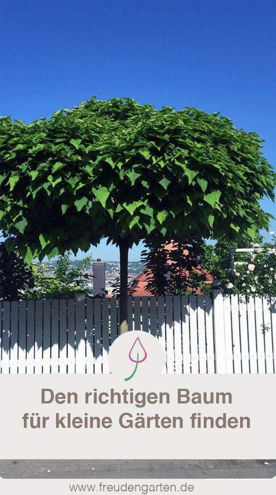 Den richtigen Baum für einen kleinen Garten finden #Garten #Baum #plants #Pflanzen #Gartenidee