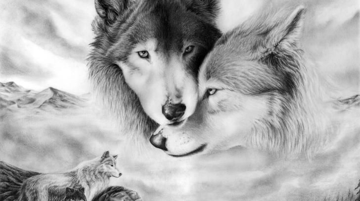 Wolves hd wallpaper - (#38918) - HD Wallpapers - Animals HQ Wallpapers on wideHdwalls.com