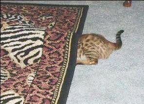 Sucks at hiding cat