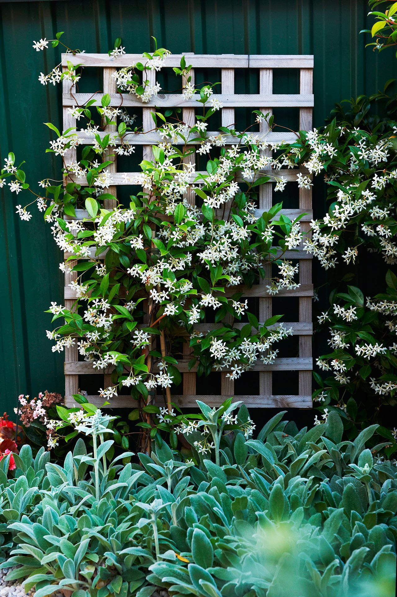 Climbing Plants 7 Fast Growing Climbers Vines And Creepers
