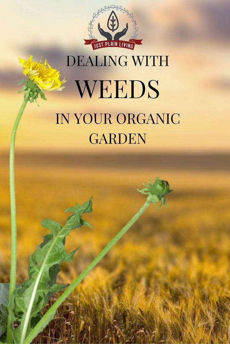 Controlling weeds in an organic garden