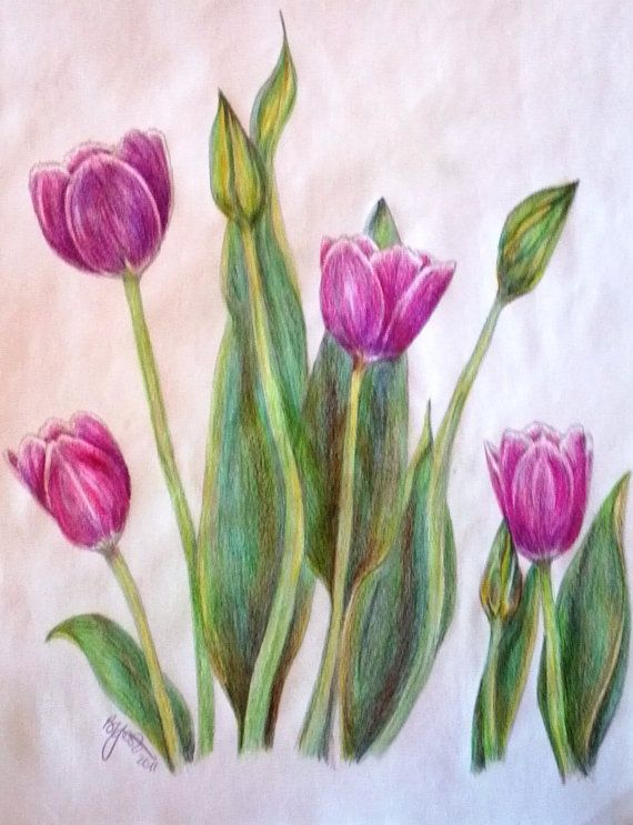 purple tulips simplified colored pencil drawing by barbsbouquet