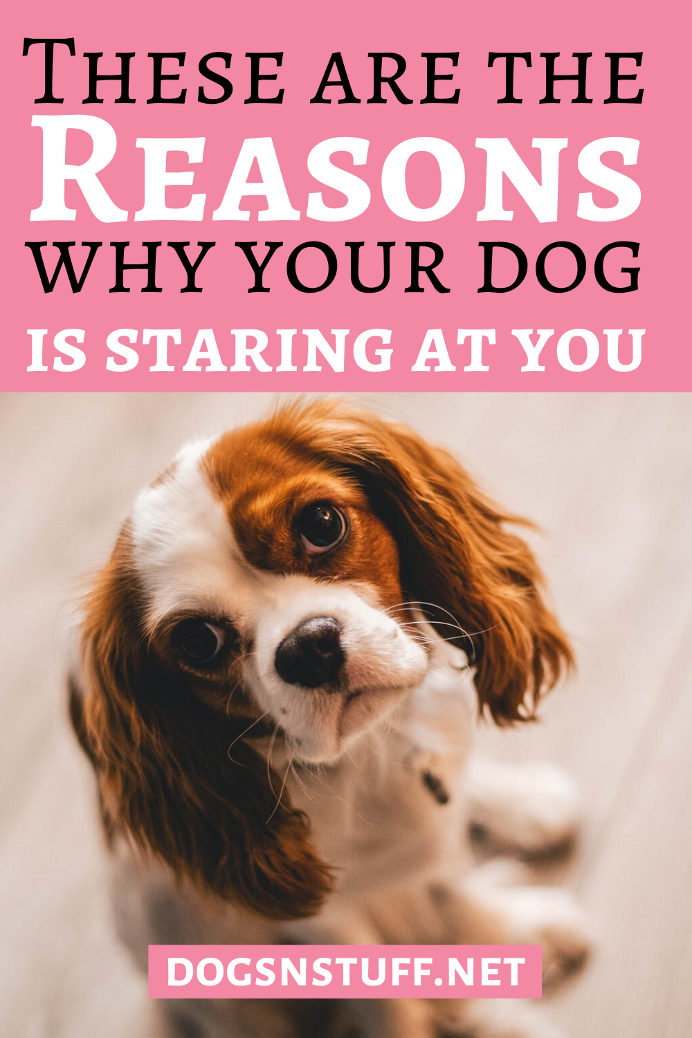 Why Does My Dog Stare At Me In 2020 With Images Dogs Dog Mom Quotes Dog Hacks