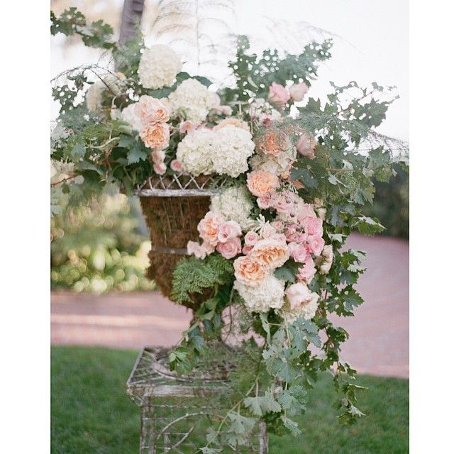 My Prized Antique Urns Filled With Gorgeous Hydrangea Open