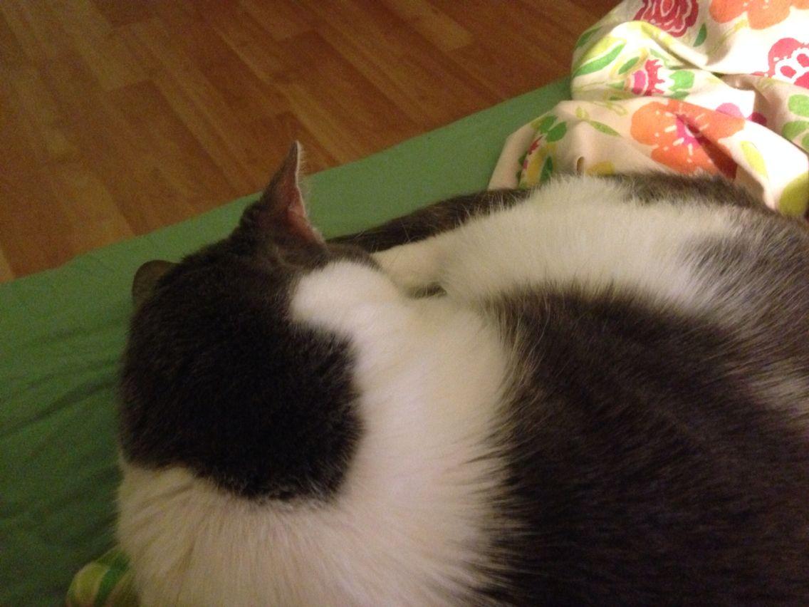 Sleeping like a ball!