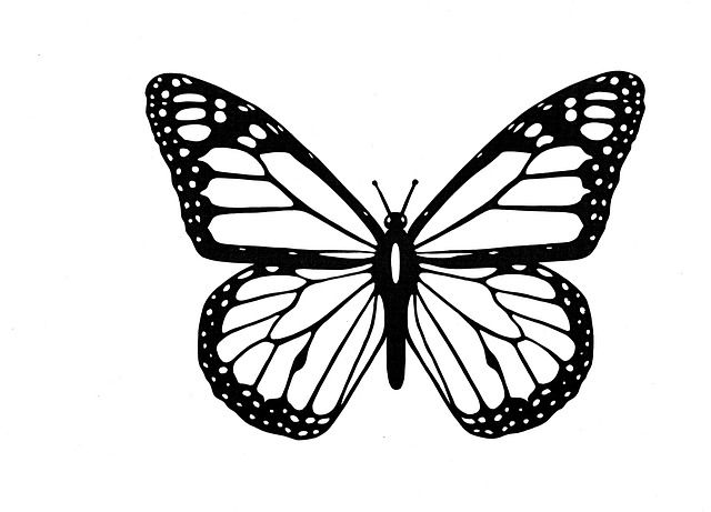Free Image On Pixabay Butterfly Black And White Butterfly Clip Art Butterfly Outline Butterfly Coloring Page