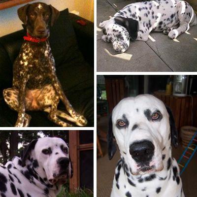 10 Populaire Hondenkruisingen Rubriek Nl Honden Leuke Honden Dieren