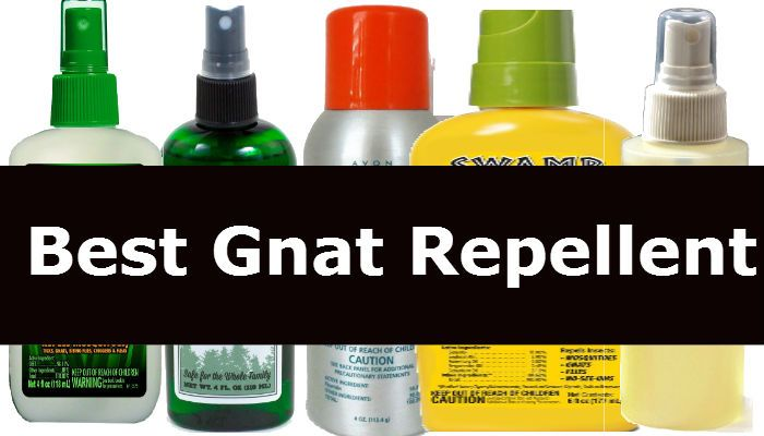how to get rid of gnat bites fast
