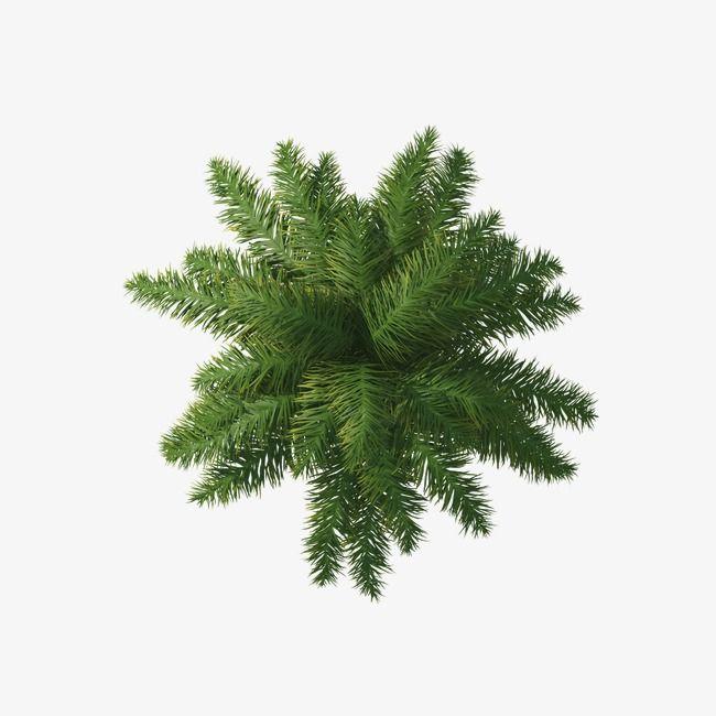 Paume Clipart Paume Vert Fichier Png Et Psd Pour Le Telechargement Libre Tree Plan Photoshop Trees Top View Tree Photoshop