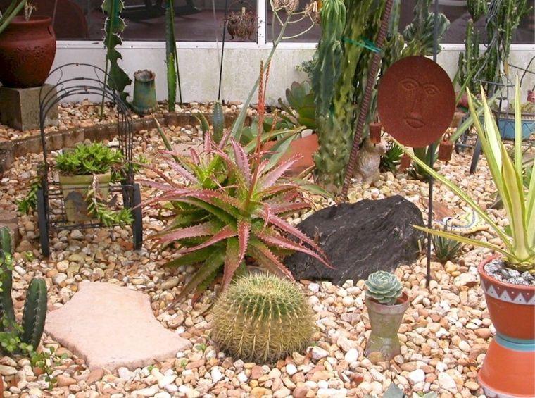 Cactus y suculentas para jardines y patios de exterior for Cactus cuidados exterior