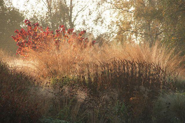 Piet Oudolf: golden grasses