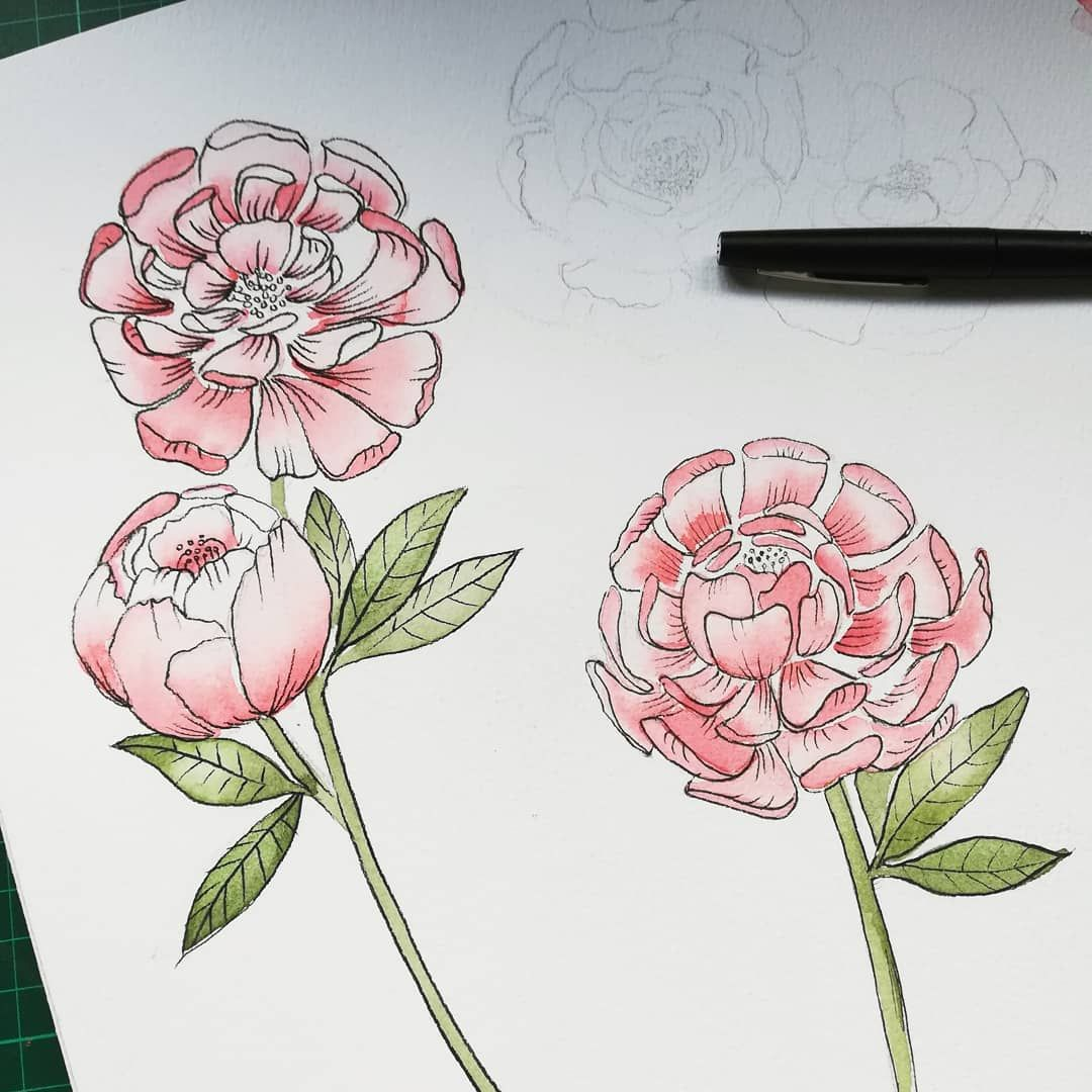 Experimentations De Pivoine Aquarelle Watercolor