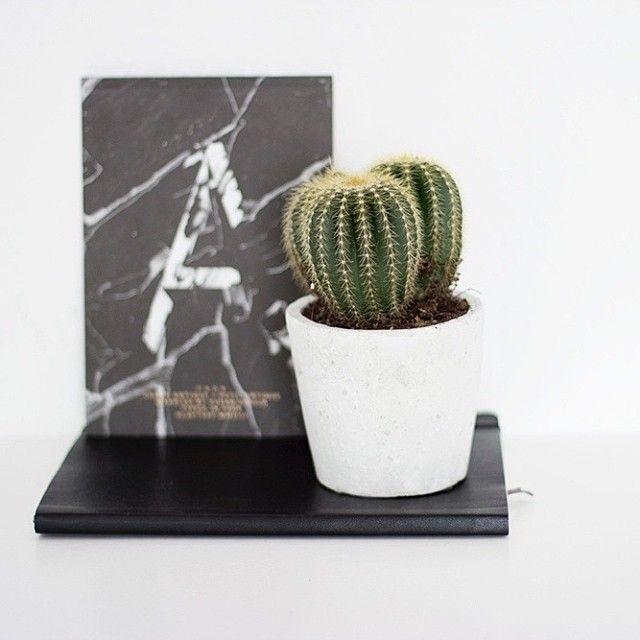 Cactus -  via Coco Lapine Design on Instagram