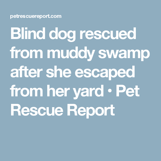 Blind dog rescued from muddy swamp after she escaped from her yard • Pet Rescue Report