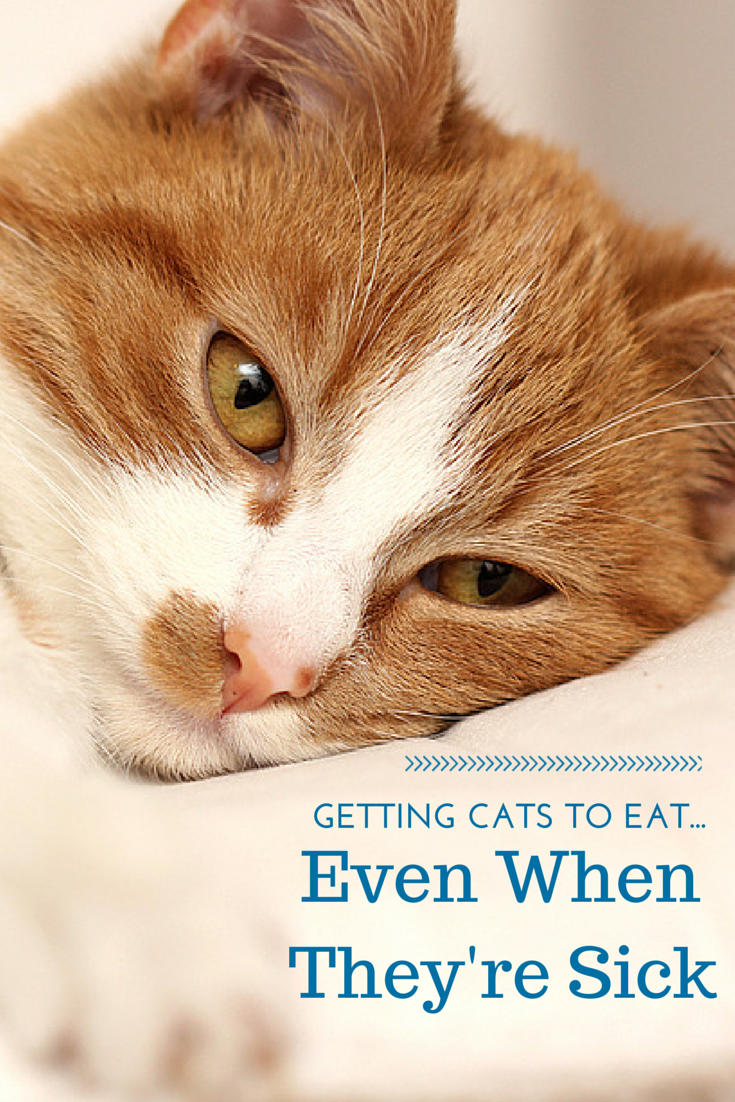 When cats feel sick they stop eating. When they stop