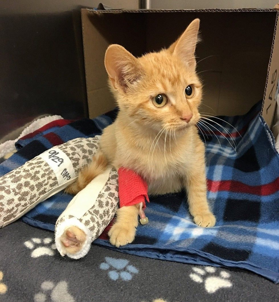 They Save Cat With Broken Legs And Help Him Walk Again What A Difference Two Weeks Make Broken Leg Cats Cute Cats