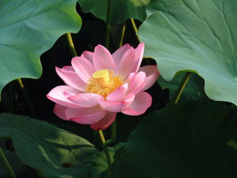 Is The Flower Basket Aurora Il Still Relevant? Lotus