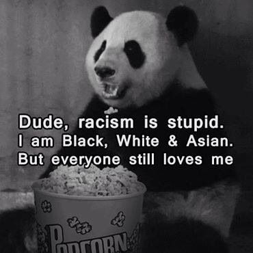 Panda Quotes Endearing Image Result For Panda Quotes  Awesome Quotes  Pinterest