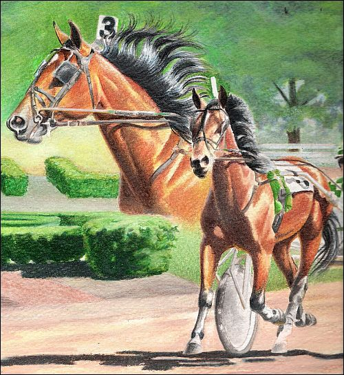 watersolublecoloredpencilhorse13-carrielewis