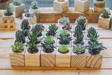 Choose the right pot material for your succulents