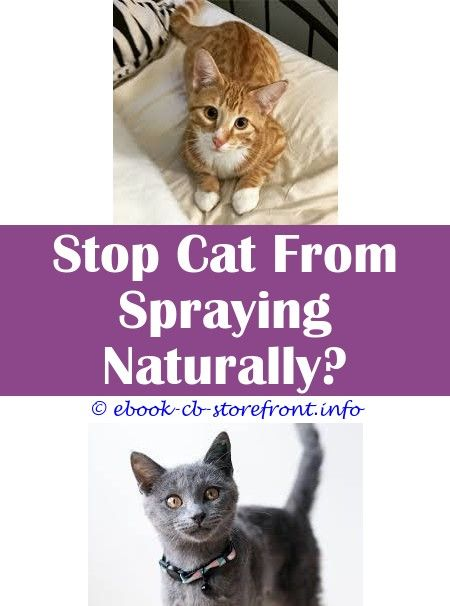 How To Get Rid Of Tom Cat Spray Smell